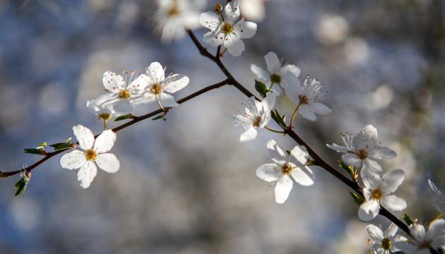 Весна перемагає: Україну прогріє до +17°