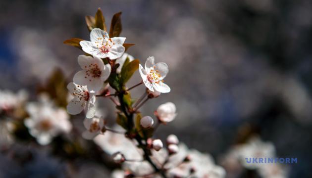Теплий подих весни: в суботу прогріє до 17°