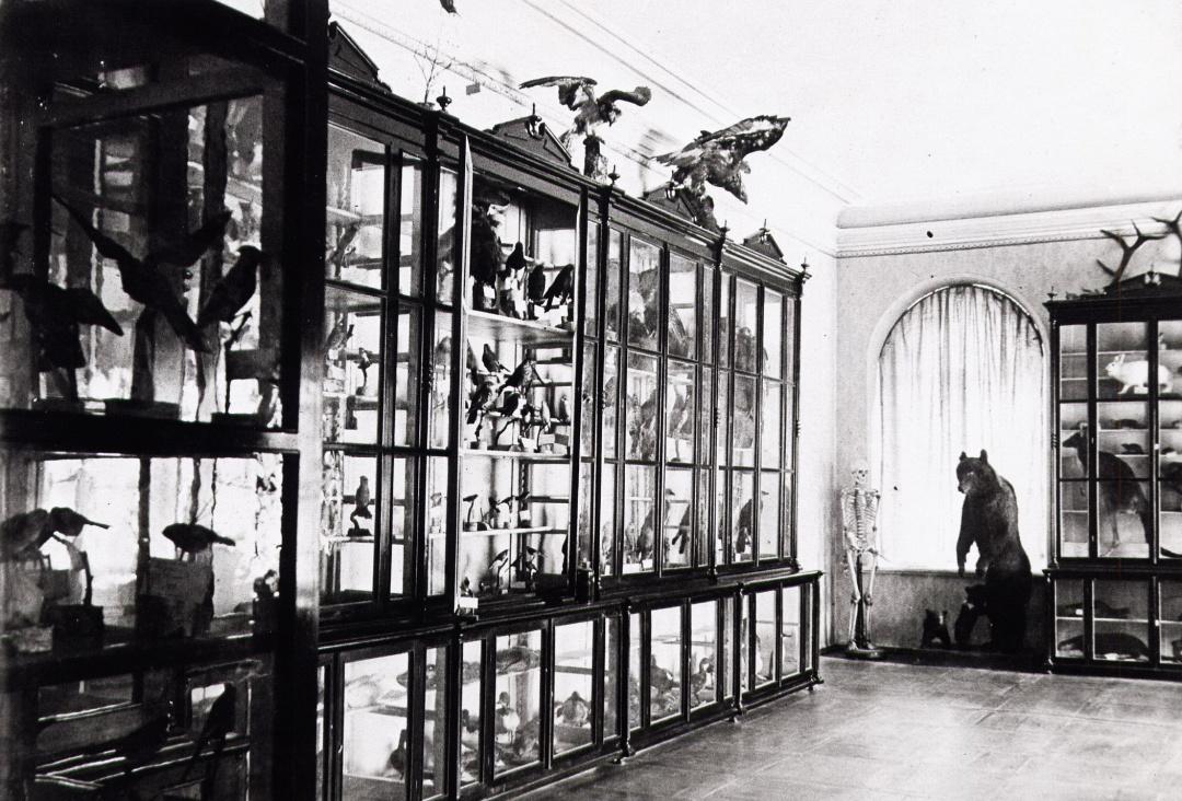 Зоологічний інститут (музей) при Томському університеті