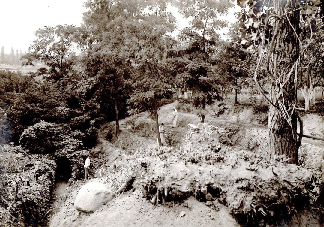 тераси з персиками в Акліматизаційному саду
