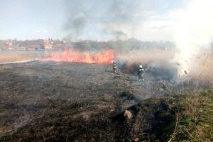 У національному парку на Одещині спалахнула масштабна пожежа