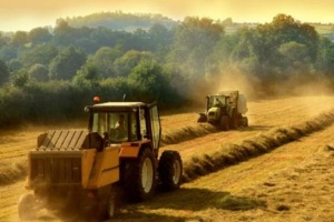 Ukrainian farmers gathered grain and leguminous crops from 83% of area – Economy Ministry