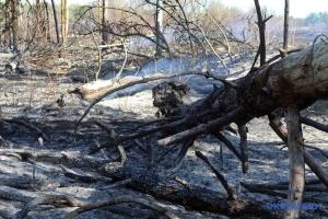 Les pompiers luttent contre le feu de forêt dans la zone d'exclusion de Tchernobyl