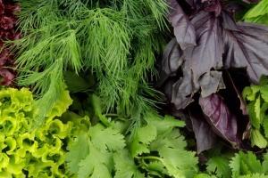 На ринку України подешевшала свіжа зелень