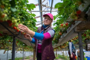 Finnland plant, Saisonarbeiter aus der Ukraine mit Charterflügen zu holen