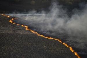 У Чорнобильській зоні горить 20 гектарів трави