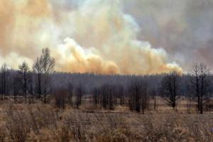 Se producen alrededor de 23 mil incendios en los ecosistemas de Ucrania desde principios de año