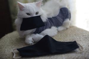 Ветеринари радять відправляти на карантин котів, чиї власники захворіли на COVID-19