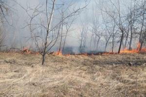 Масштабный лесной пожар на Черниговщине тушат с самолетов