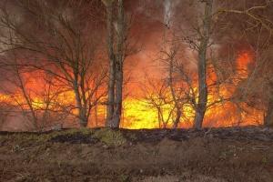 В Полтавской области лесные пожары уничтожили более 130 гектаров сухостоя