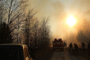 На Житомирщині локалізували всі великі лісові пожежі