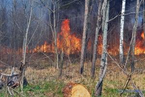 У Чорнобильській зоні досі гасять пожежі - уже сім днів поспіль