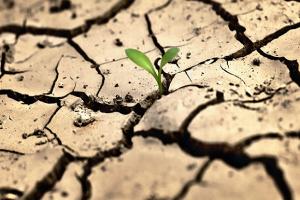 В Одесской области фермеры оценили ущерб от засухи на сумму более 570 миллионов