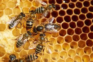 В Карпатах обустраивают медовые маршруты для туристов