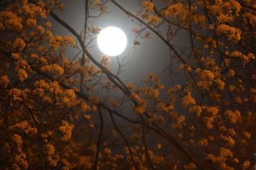 Les Ukrainiens ont pu admirer la Super Lune rose