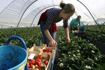 W Polsce rolnicy są zainteresowani ukraińskimi pracownikami – minister Ardanowski