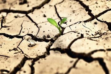 Україна втратила від посухи 2,6% посівів озимих – Мінекономіки