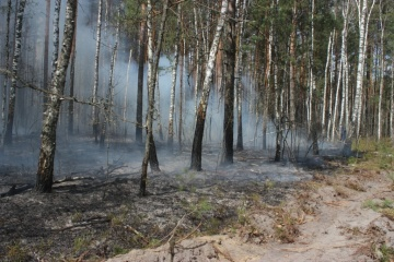 Zelensky: Todos los incendios forestales en la zona de Chornobyl quedan extinguidos