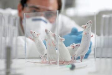 Aujourd'hui marque la Journée Mondiale des animaux dans les laboratoires