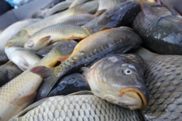 Ukraine exports fish products for over $1 mln in Jan-Feb