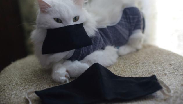 Ветеринары советуют отправлять на карантин котов, чьи владельцы заболели COVID-19