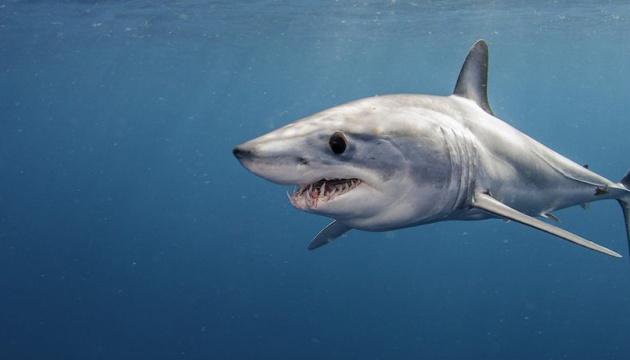 На Карибах акула убила женщину