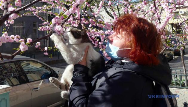 Чорнобильська зона у вогні, котяче ханамі й рожева суперповня