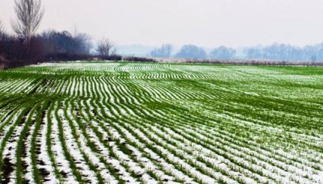 Заморозки пошкодили посіви ярого ячменю, гороху та буряків в Україні