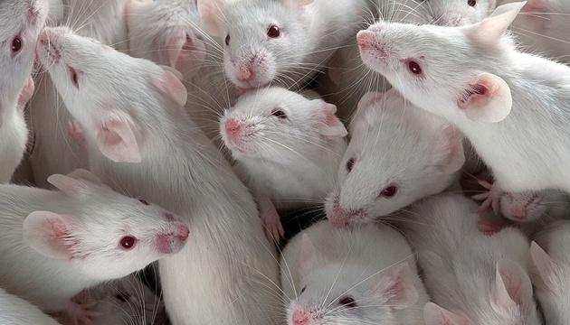 Експерименти над тваринами: Рада відхилила законопроєкт, проти якого виступали зоозахисники