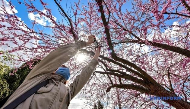 """""""Дерево Іуди"""", тюльпани і магнолії: у Запоріжжі зацвів ботсад"""