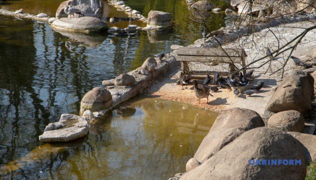 У Київському зоопарку чекають на поповнення