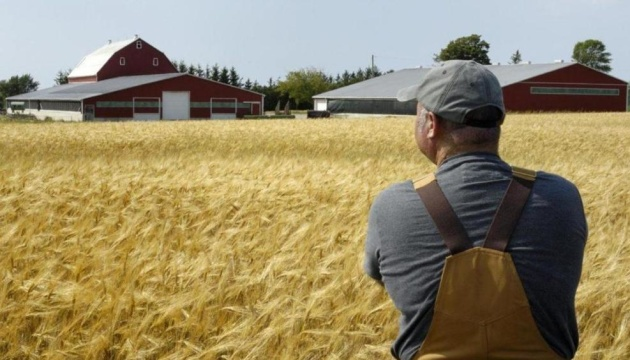 Wheat stocks in Ukraine fall by 16.2% – experts