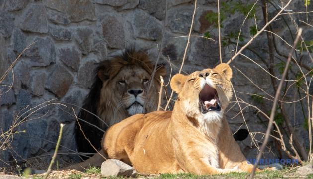 Київський зоопарк відкривається для відвідувачів 23 травня