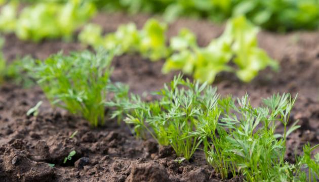 «Посій насіння з МХП»: агрохолдинг завершує соціальний проєкт для пайовиків