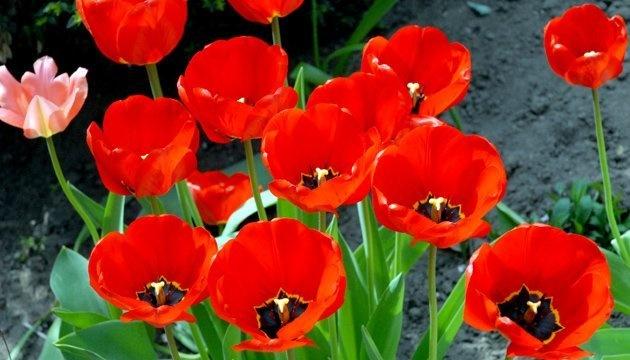 1 травня: народний календар і астровісник