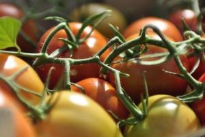 Le Maroc devient le 5ème fournisseur de tomates en Ukraine
