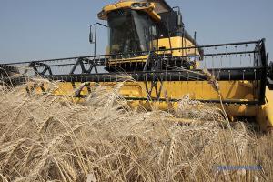 Україні прогнозують цьогоріч рекордний урожай пшениці