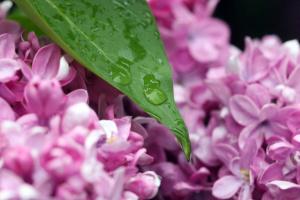 Неделя в Украине начнется с дождей и гроз
