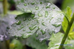 """От +2° до +24°: украинцам прогнозируют температурные """"качели"""" и дожди"""