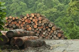 В Гослесагентстве обсудили проект о совершенствовании законов в сфере лесных отношений