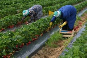 Польський ринок праці: Чи є там місце українцям у коронакризу та після?