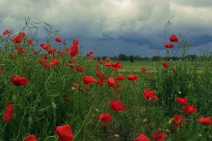 Дожди, грозы и до +27°: какой будет погода в первую летнюю неделю