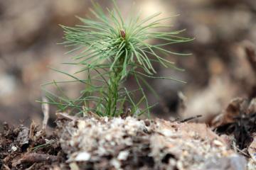 La Agencia Estatal de Recursos Forestales regenera más de 22.000 ha de bosques este año