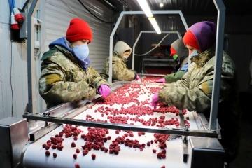 Українські фермери готові платити сезонним робітникам у півтора раза більше, ніж іноземні