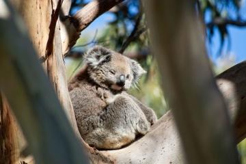 Aujourd'hui marque la Journée mondiale des espèces menacées