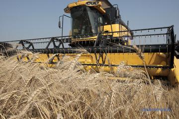 Ponad 75 mln ton: Ministerstwo Gospodarki prognozowało zbiory zbóż w tym roku
