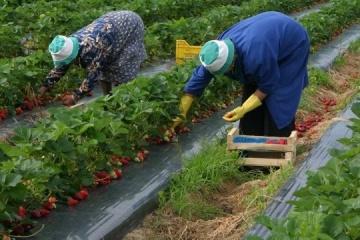 Polski rynek pracy: czy jest w nim miejsce dla Ukraińców w okresie kryzysu koronawirusa i po nim?