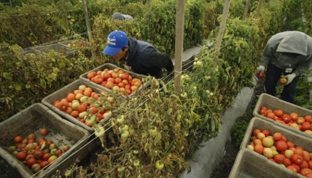 В Італії планують легалізувати ще пів мільйона трудових мігрантів