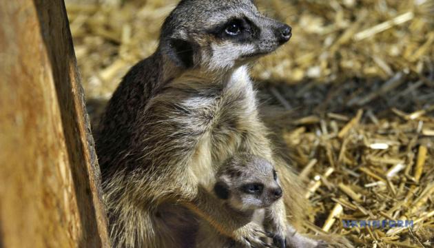 Стало відомо, коли Подільський зоопарк почне прийматиме відвідувачів