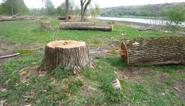 На Вінниччині у ландшафтному заказнику незаконно вирізали понад 120 дерев